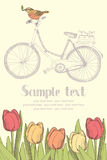 Vintage bicycles and flowers card Royalty Free Stock Photos
