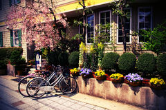 Vintage bicycles and Sakura. Vintage bicycles are parking in front of the little garden Stock Photos