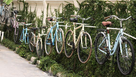 Vintage Bicycles. On the wall Stock Image