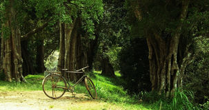 Vintage bike, fantastic woods, sunlit greeen grass Stock Photo