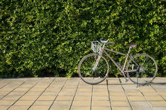 Vintage Bike on Sidewalk with Green Leaf Backdrop Royalty Free Stock Images