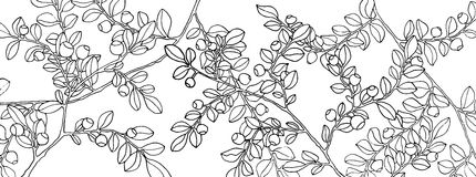 Vintage Bilberry Seamless Pattern Royalty Free Stock Image