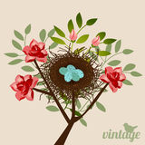 Vintage bird's nest Royalty Free Stock Photos