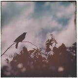 Vintage Bird in Tree 1 Stock Photos