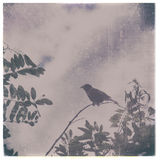 Vintage Bird in Tree 2 Royalty Free Stock Photography