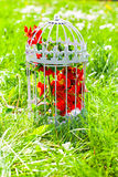 Vintage birdcage with spring blossom Royalty Free Stock Photography