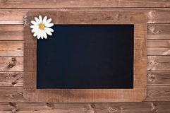 Vintage blackboard with a daisy on wooden planks Royalty Free Stock Image
