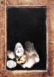 Vintage Blank wooden framed blackboard with group of Quail eggs Royalty Free Stock Photography