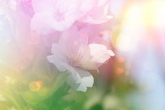 Vintage blossom flower background Royalty Free Stock Images