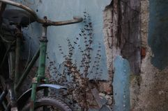 Vintage blue wall with falling plaster and broken bicycle Stock Images