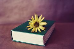 Vintage Book and Flower. A vintage hardcover book with a green cover, and a yellow daisy laid on top. Still life library photo royalty free stock photo