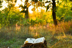 Vintage book of poetry outdoors under a tree. Vintage book of poetry outdoors with fallen leaves on it, under a tree in front of blurred sunset stock images
