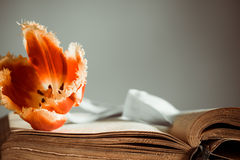Vintage book with tulip Royalty Free Stock Photography