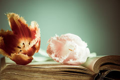 Vintage book with tulips Stock Image