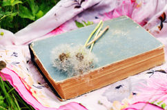 Vintage book and white dandelion flowers Royalty Free Stock Images