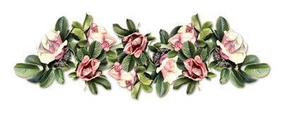 Vintage border. Of wild rose isolated on white background Royalty Free Stock Photography