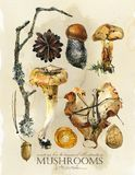 Vintage botanical poster. hand drawn watercolor floral art print with mushrooms. Autumn nature illustration royalty free illustration