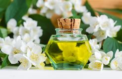 Vintage bottle with cosmetic/massage jasmine aroma oil tincture, essential oil, extract, infusion, perfume. Jasmine blossom flowers background. Copy space royalty free stock photo