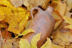 Vintage Bottle and Fallen Maple Leaves Stock Image
