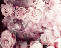 Vintage bouquet of fresh pink roses. Royalty Free Stock Image
