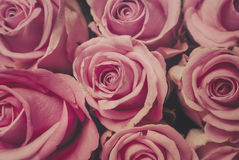 Vintage. Bouquet of pink roses in vintage look Royalty Free Stock Photos