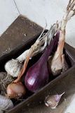Vintage box with freshly harvested garlic and onions Stock Photo