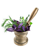 Vintage bronze mortar and pestle with fresh herbs Royalty Free Stock Image