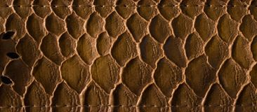 Vintage brown leather texture with metal decoration background. Vintage brown leather texture snake skin-like embossed design for the background royalty free stock photography