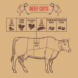 Vintage butcher cuts of beef scheme vector Stock Image