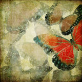 Vintage butterflies. Vintage grunge  background with butterflies Stock Photography