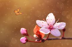 Vintage butterfly and cherry tree flower Stock Photo