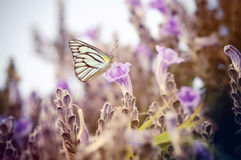 Vintage butterfly and flower Royalty Free Stock Photo