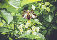Vintage butterfly in the garden Stock Photography