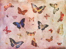Vintage butterfly background collage Stock Image