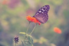 Vintage butterfly and orange color flower in spring. Royalty Free Stock Image
