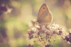 Vintage butterfly Stock Photo