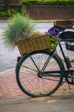 Vintage bycicle with basket and green plants parked on the street.  Stock Image