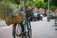 Vintage bycicle with green plants in basket parked on the street.  Royalty Free Stock Photos