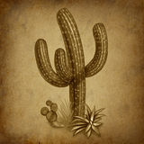 Vintage cactus with grunge texture. Cactus desert symbol representing a dry arid climate in a grunge vintage texture background Stock Photos