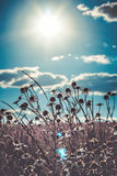 Vintage camomile and sky Stock Photo