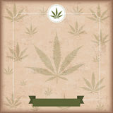 Vintage Cannabis Sativa Flyer Stock Image