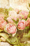 Vintage canvas rose print Stock Photography