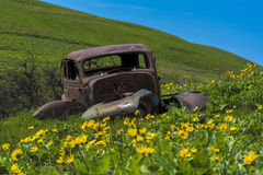Vintage car in a field of wild flowers Royalty Free Stock Photography