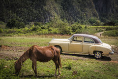 A vintage car next to a horse in Vinales, Cuba royalty free stock image