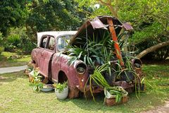 Vintage Car, Plants Under Bonnet Stock Photography