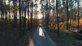 Vintage car rides in forest in sunlight stock footage