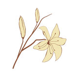 Vintage card with abstract lily flowers Royalty Free Stock Photography