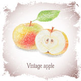 Vintage card with apple. Royalty Free Stock Photos