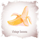Vintage card with banana. Stock Image