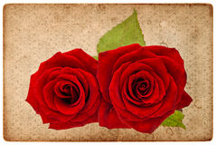 Vintage card board with red roses Stock Images